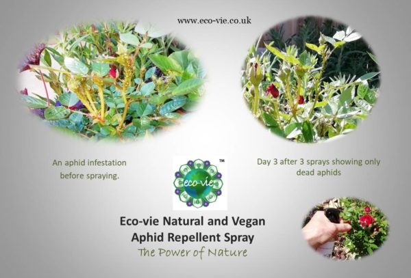 photos of before-and-after-eco-vie-aphid-repellent